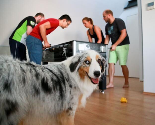 El equipo de Kinsta jugando al futbolín con la perrita Daisy