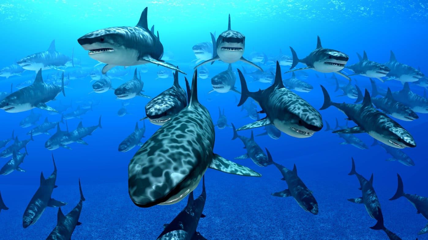 Strategia Red ocean vs strategia blue ocean